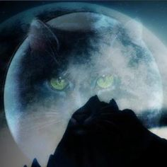 StarClan will be with the cats always...