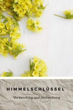 Himmelschlüssel - Heilpflanze? Essbar? Unkraut? Pineapple, Fruit, Fitness, Food, Healthy Nutrition, Herbal Medicine, Weed, Medicinal Plants, Feel Better