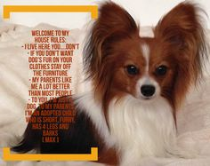Papillon's house rules