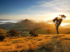 Sunrise Peggy's Hill - Otago Peninsula by Todd & Sarah Sisson      Thanks for viewing :)    Visit us online at www.sisson.co.nz/shop/shop-by-product/canvas-prints.html    Cheers - Todd & Sarah Sisson