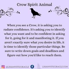 Meaning Of Crows, Bird Meaning, Nature Meaning, Spiritual Meaning, Raven Spirit Animal, Animal Spirit Guides, Animal Meanings, Animal Symbolism