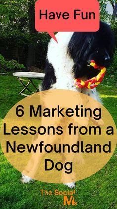 The Marketing, Content Marketing, Online Marketing, Social Media Marketing, Relationship Marketing, Influencer Marketing, Newfoundland, Social Media Tips, Fun