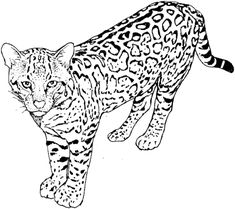 Leopard 5 Coloring Page