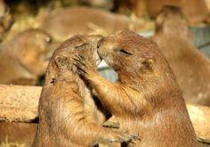 Baci insoliti: anche gli animali sanno fare smack!
