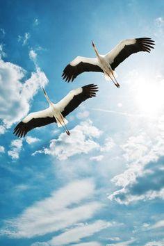 Blue sky and birds