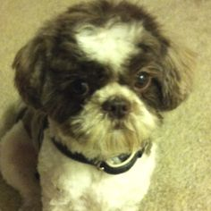 Slightly skeptical to his new hair cut...---> Reminds me of one of my pups from along time ago ♥