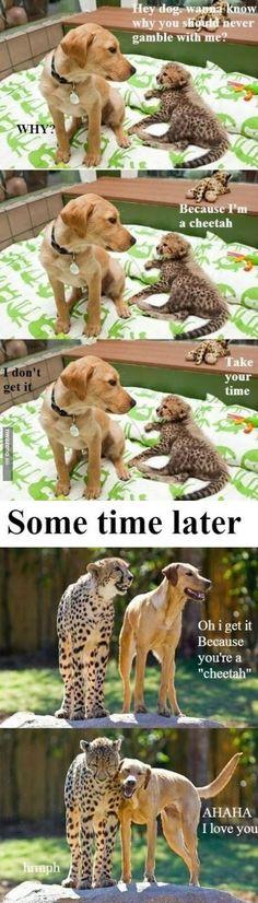 Slow dog