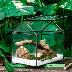 NCYP Large Handmade  Geometric Glass Close Terrarium Box House image 2 Terrarium Containers, Glass Terrarium, Terrarium Ideas, Planter Ideas, Terrariums, Reptile Habitat, Small Potted Plants, Container Gardening, Indoor Gardening