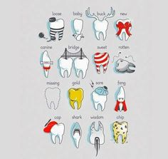 """""""The Complete Guide to Understanding Teeth"""" by Dr. Nova Kane #Dentist"""