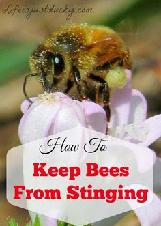How To Keep Bees From Stinging You. The first step in preventing bee stings is understanding WHY bees sting. Includes information on protective gear.