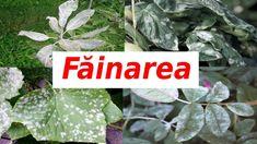 Fruit Trees, Grape Vines, Solar, Avocado, Youtube, Herbs, Gardening, Home, Agriculture