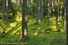 Luontorunoja Orvokki-oravan luontokoulu Plants, Plant, Planets