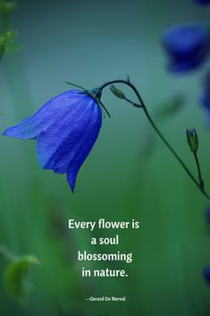 flower quotes Spring Quotes with a Soulful Shimmer soulful nature quote with a blue flowerEvery flower is a soul blossoming in nature. The post Spring Quotes with a Soulful Shimmer appeared first on Diy Flowers. Soul Quotes, New Quotes, Happy Quotes, Words Quotes, Inspirational Quotes, Funny Quotes, Motivational, Sayings, Famous Quotes
