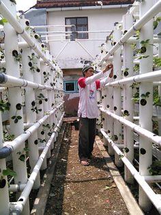 New Planting