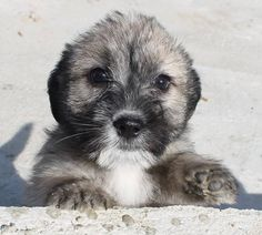 Yuna  3 month old female Cross-Breed #cutedogs #cute #dogs #dog #pets #babblepets