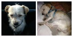 lost!!! this baby's foster lost him in culver city, ca. he's a terrier mix about 1 years old. please contact 310.995.4747