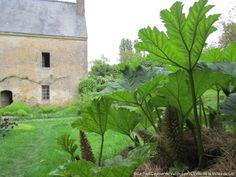Beaumont-sur-Dême. Prieuré de Vauboin : la folie du jardin (Gunnera)