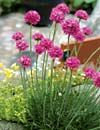 Stenbed Nemme planter til stenbed Fotos: A. Olesen