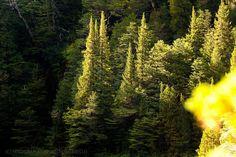 Momento de luz - Parque Tagua, Patagonia - Chile
