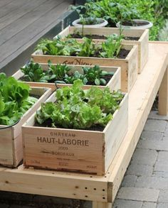 Wine box raised garden planters Creating DIY raised garden beds, or garden boxes, in your backyard is a great way to protect your veggies, herbs, and flowers Raised Garden Planters, Building Raised Garden Beds, Diy Planters, Raised Beds, Outdoor Planters, Raised Vegetable Gardens, Vegetable Garden Design, Vegetable Gardening, Vegetable Planters
