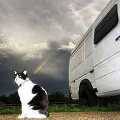 I love #AdventureCats really I love all cats. This is @minniemootheadventurekitty who apparently knows how to set up a good picture.    =  #VanCrush #vanlife #thatsdarling #darlingweekend #myunicornlife #igkitty #dailymeow #furbaby #ilovecats #adventurecat #backcountrypaws #cowcat #instacat #365cat #bestmeow #campingwithcats #rainbowcat by van.crush