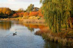 Autumn in the Chicago Botanic Garden