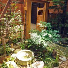 KAZさんの、植物,祖母の家,つくばい,盆栽,苔玉,のお部屋写真