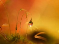 """A Little Ray of Shine"" - Sandra McCabe"