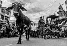 Bénarès : ruelles tortueuses & dieux en pagaille