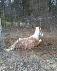 Neighbors and concerned horse lovers contacted numerous horse rescues as well as the local sheriff. Bales of hay were brought to the field by until the authorities forced the owners to surrender the 9 horses still alive.