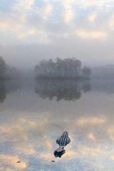 """""""Foggy Sunrise With Alligator"""" Long Pine Key, Everglades National Park, Florida. Photographer: Lorraine Thomas"""