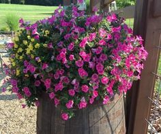 Don't give up on those tired and worn out hanging baskets in late summer - replant or re-purpose them in your landscape to rejuvenate them!