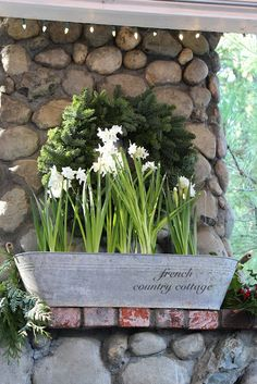 FRENCH COUNTRY COTTAGE: New Years Eve Sparkle~ paper whites