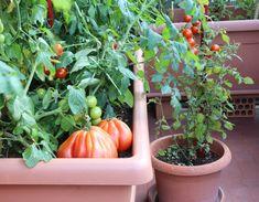 Τι ΤΡΩΜΕ για Ισχυρό Ανοσοποιητικό — Ολιστική Παιδίατρος - Ανοσολόγος, Ομοιοπαθητική για παιδιά, Βελονισμός Growing Vegetables In Containers, Growing Veggies, Bushel Baskets, Window Planters, Plant Needs, Cherry Tomatoes, Compost, Container Gardening, Natural Remedies