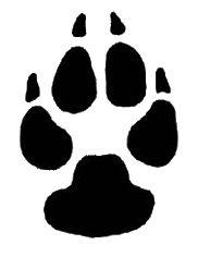 dog-paw-prints