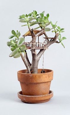 Artist Jedediah Corwyn Voltz constructs miniature handcrafted tree houses around common houseplants, bonsais, succulents and cacti. Garden Terrarium, Succulents Garden, Planting Flowers, Succulent Plants, Indoor Garden, Garden Art, Dream Garden, Herb Garden, Potted Plants