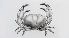 drawing of crab - Google Search