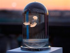 La Darwin Sect nous présente son dernier projet, le Darwin Tank ! Un aquarium à méduses à la forme unique, présenté sur la plate forme de crowdfunding Kickstarter pour lancer la première série.…