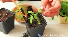 Выращивание рассады своими руками не только выгодно, но и очень интересно!
