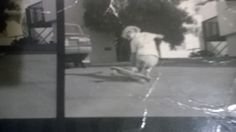 Rider Jay Adams - Pre zephyr shots .When I met jay he took me to the z house where he lived know and then he said throw the trash out for me and in the trash can were this photo's I pulled thim out went to him he said keep em my dad shot them I gave some to Nathan Pratt I thought I had lost these just found em.Words by Jesse Martinez