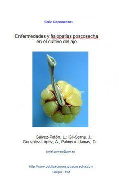 Enfermedades y fisiopatías poscosecha en el cultivo del ajo