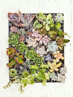 Make a Living Frame with Succulents - Succulents and Sunshine