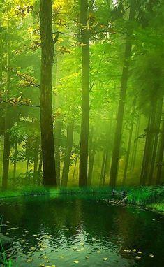 Beautiful Landscape of Nature Beautiful World, Beautiful Places, Beautiful Pictures, Foto Nature, Landscape Photography, Nature Photography, Tree Forest, Amazing Nature, Belle Photo