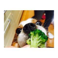 🐶 * * * / この緑の、もじゃもじゃ なんてゆーんですか? \ * * * #キャバリアキングチャールズスパニエル #キャバリア #ブレンハイム #キャバリア部  #いぬすたぐらむ #犬#愛犬  #犬のいる暮らし  #itsacavthing#cavlife #cavalier #ckcs#cavlove #cavalierkingcharlesspaniel  #cavaliercommunity #instadog #dog #doggy#doglife  #petstagram #instagood #cute #cutedog #mydog  #puppy #pup #happydog #tbt #followme #love