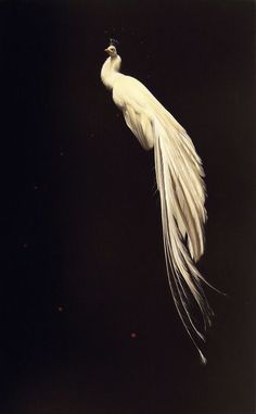Majestic bird • SkinSins NY Mood//board
