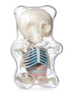 Anatomy Gummy Bear (Clear)