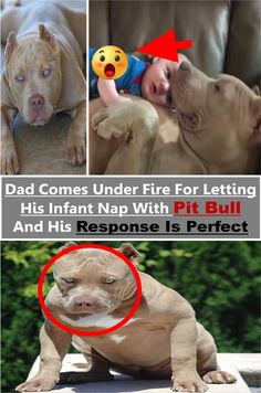 #dad #comes #under #fire for letting his #infant #nap with #pitbull and his #response is #perfect #dogs #amazing #animals Pet Day, Supreme, Gate, Pitbulls, Connect, Infant, Cute Animals, Memes, Amazing