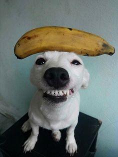 Um sorriso fofo