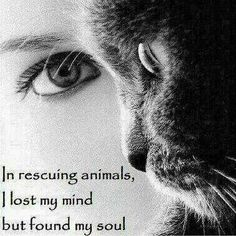 In rescuing animals I lost my mind but found my soul
