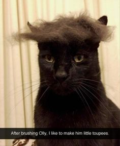 Submitted by: Unknown                        Tagged:   Cats ,  brush ,  toupee ,  wig   Share on Facebook